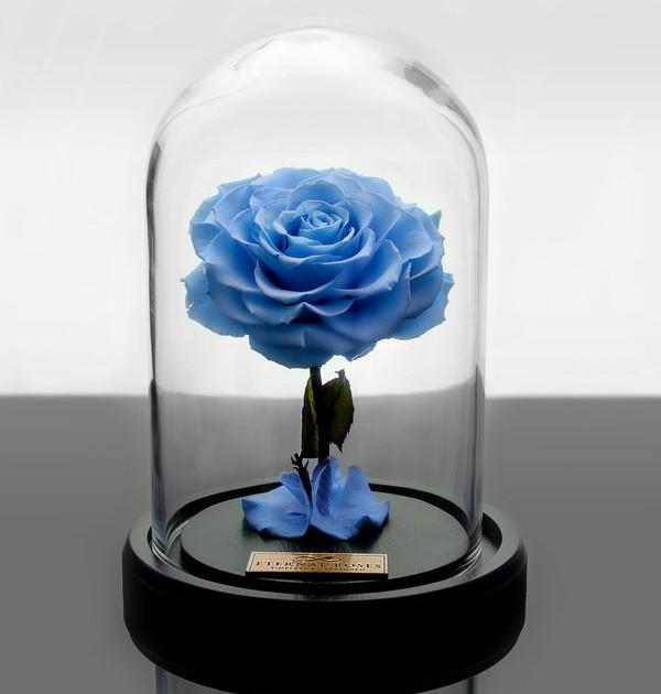 باکس شیشه ای رز جاودان آبی