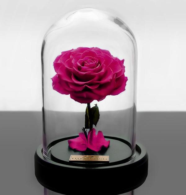 باکس شیشه ای رز جاودان صورتی پر رنگ
