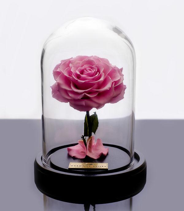 باکس شیشه ای رز جاودان صورتی