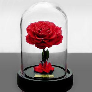 باکس شیشه ای رز جاودان قرمز