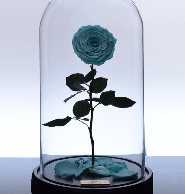 گل رز جاودان کلاسیک - آبی فیروزه ای