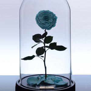 گل رز جاودان کلاسیک - زرد