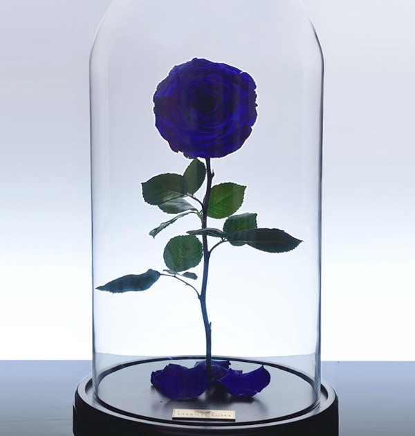 گل رز جاودان کلاسیک - آبی