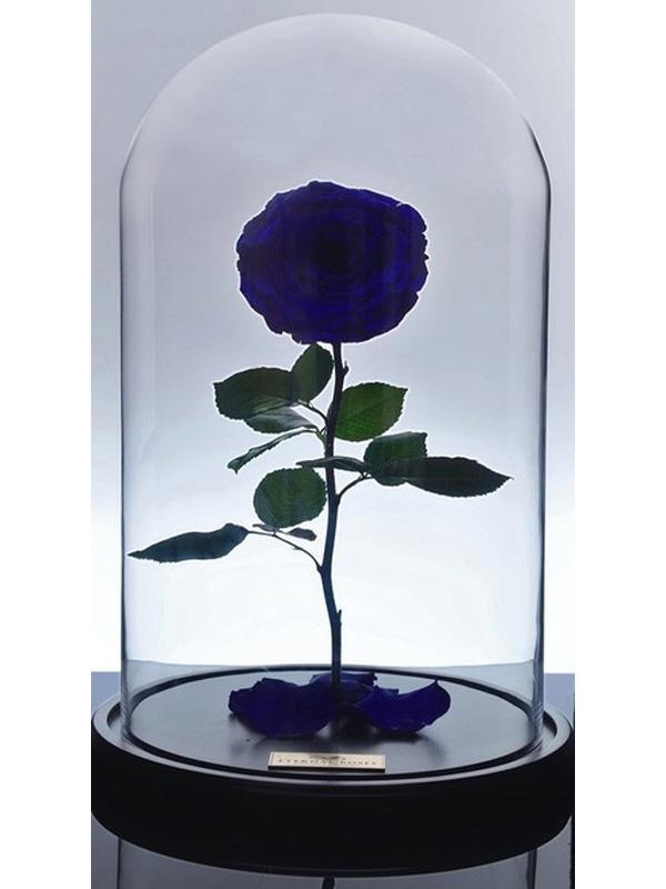 گل رز دیو و دلبر - آبی