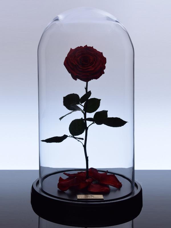 گل رز جاودان کلاسیک قرمز 2
