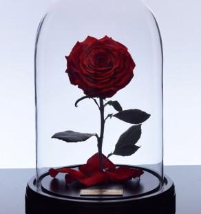 گل رز دیو و دلبر - قرمز